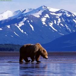 Роль географического положения в продаже Аляски