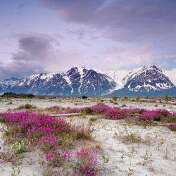 Роль экономики в продаже Аляски